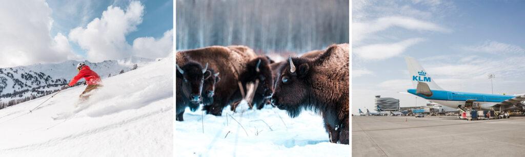 Foto van skiën in Marmot Basin in Canada, bizons in Edmonton en Edmonton International Airport